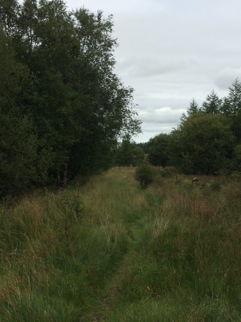 20180820 Boggy path through the forest