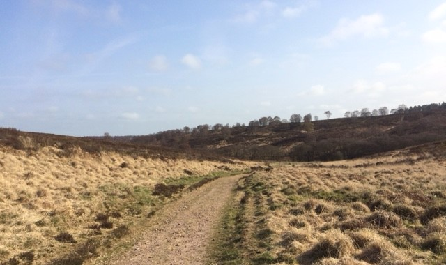 20190401 Cannock Chase approaching the Sherbrook Valley