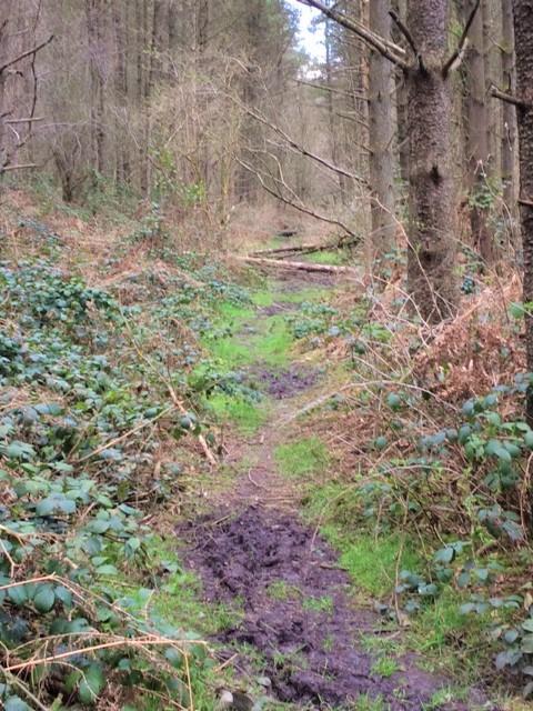 20190402 Path near Ordley brook