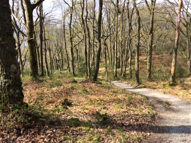 20190421 Pleasant woodland path beyond Anchorage Cottage