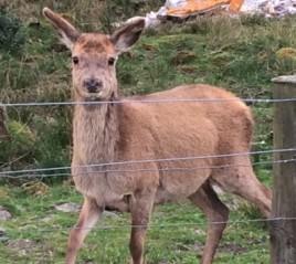 20190423 Deer