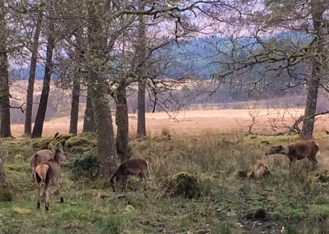 20190423 More Deer