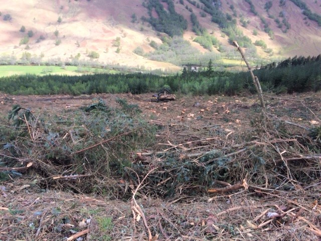 20190426 Forestry work near Fort William
