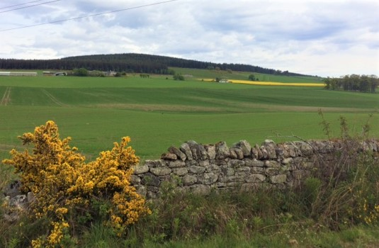 20190513 Rich agricultural land above Alness