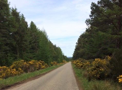 20190513 Typical section of road walking near Tain