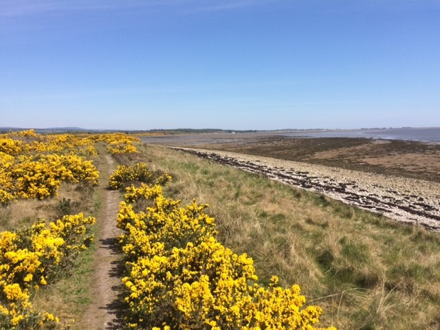 20190514 The path by the shore below Dornoch Bridge