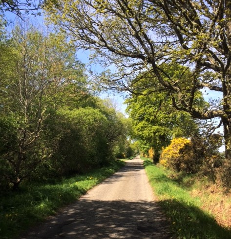20190514 The quiet lane to Dornoch