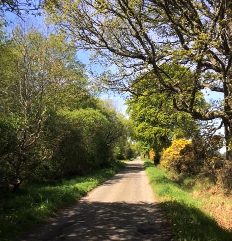 20190514 The quiet lane to Dornoch