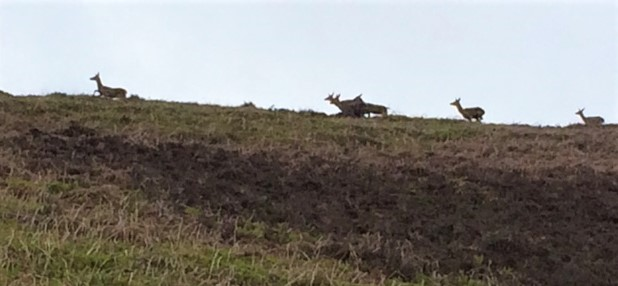 20190518 Deer above the trail